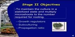 Tissue Culture II