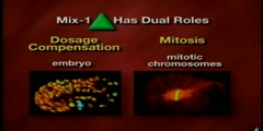 Expounding on the Process of Mitosis