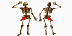 The Body's Bony Frame