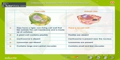 Comparison Of Plant Cell And Animal Cell