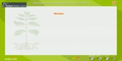 Water Absorption In Plants