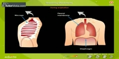 Movements of Breathing Part-2