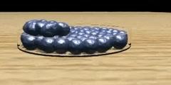 Mitosis  nice animation