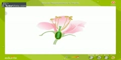 Process of plant sexual reproduction