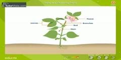 Study of Flowering Plants