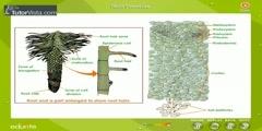 Part 1 of root pressure