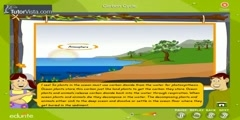 How Carbon Cycle Works?