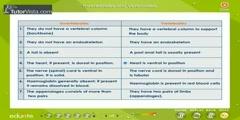 Characteristics of Animal Groups