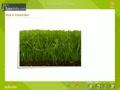 Plants transpiration