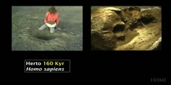 The Delicate Process of Excavating and Cleaning Fossils