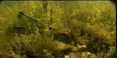 Environment for Stickleback