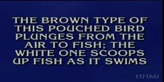 The identity of the stickleback fish on jeopardy!