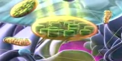 Tour Of A Plant Cell