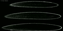 Bicoid gradient formation in Drosophila embryos