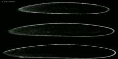 Bicoid gradient formation in Drosophila embryos