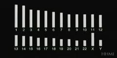 Human chromosomes - animation