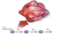 Regulation of cellular metabolism: feedback pathways
