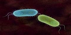 Genetic Material Exchange in Bacterial Conjugation