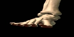 NurseReview.Org - Ankle Inversion Eversion