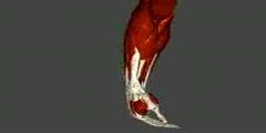 NurseReview.Org - Forearm Hand - Anatomy & Physiology
