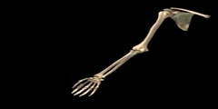 NurseReview.Org -  Humerus Adduction Abduction