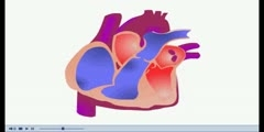 NurseReview.Org - Animation on Cardiac Cycle