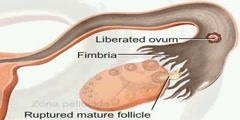 NurseReview.Org - Animation on Female Reproductive System