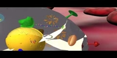 Cell responses to HCV