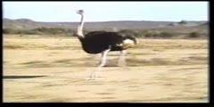 Amazing birds 4