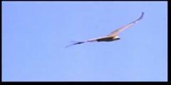 The evolution deception - amazing Birds 6