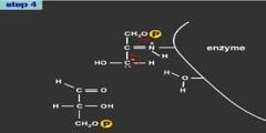 Analysis of Glycolysis