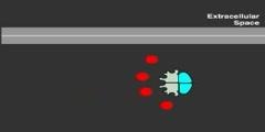 cAMP Signaling