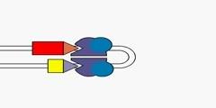 Process of gene recombination