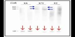 Sex Chromosomes 2