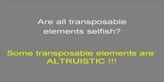Transposons 5