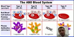 Explanation of Blood Type