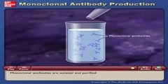 Explanation of Monoclonal Antibody Production