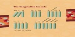 What is coagulation cascade?