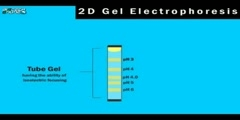 Explanation of Proteomics 2D Gel Electrophoresis