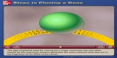 What are the steps in cloning genes (molecular cloning)
