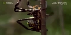 The art of spider fighting part 1