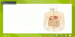 Digestive system in our body