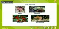 Animals Classification