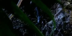 Monster Centipede Vinegaroon And Ground Spider