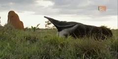 Giant Anteater in Mutant Planet