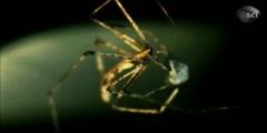 Ogre faced spider vs soldier ant monster bug wars