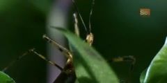 Assassin Bug the  Monster Bug Wars