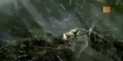 Monster Bug Wars - The Tent Spider