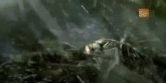 Monster Bug Wars - The Tent Spider