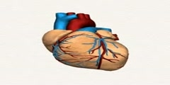 How the Heart Beats